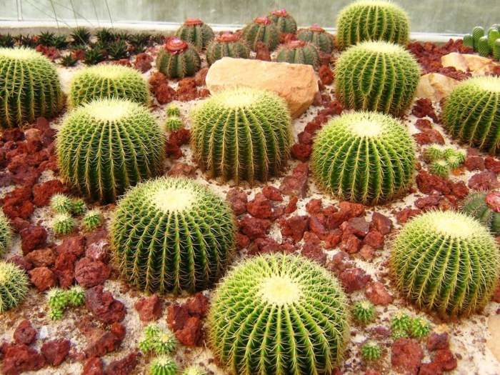 jardin de cactus elegantes lineas formas