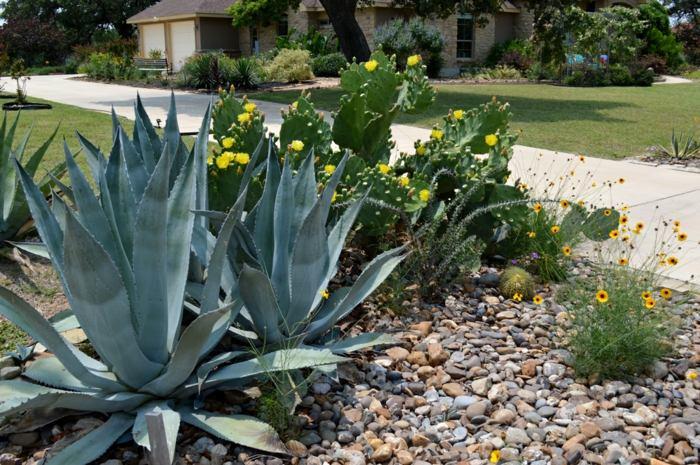 Jardin de cactus ideas para creaciones impresionantes for Cactus variedades