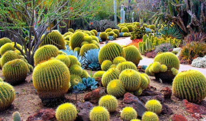 jardin de cactus rocas fuentes ramas