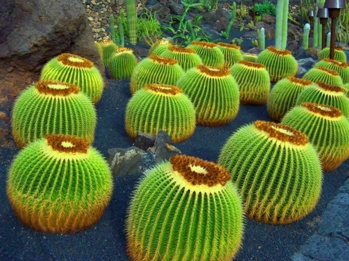 jardin de cactus uniforma sensaciones colore