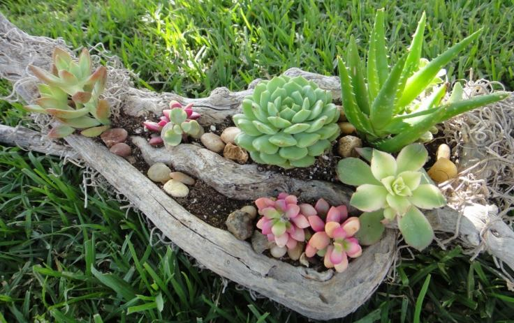 Suculentas ideas para decorar el jard n for Como decorar un jardin con plantas