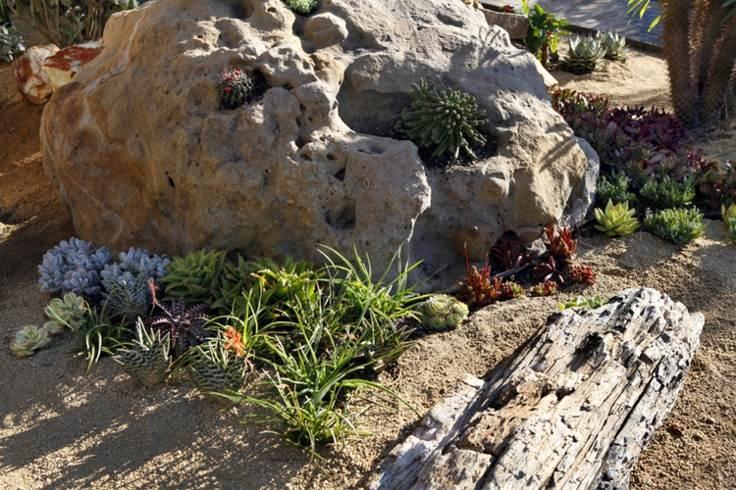 jardin rocoso suculentas madera decoracion ideas