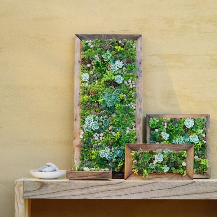 jardines suculentas efectos soluciones enmarcados
