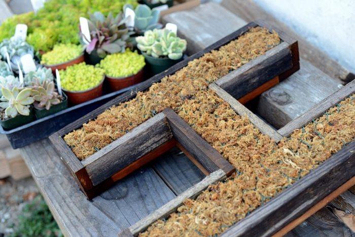 jardines suculentas letras preparacion marcos