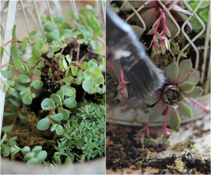 Jardines suculentas en proyectos creativos increíbles