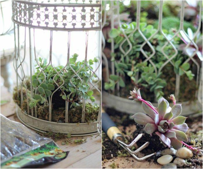 jardines suculentas materiales conceptos muestras