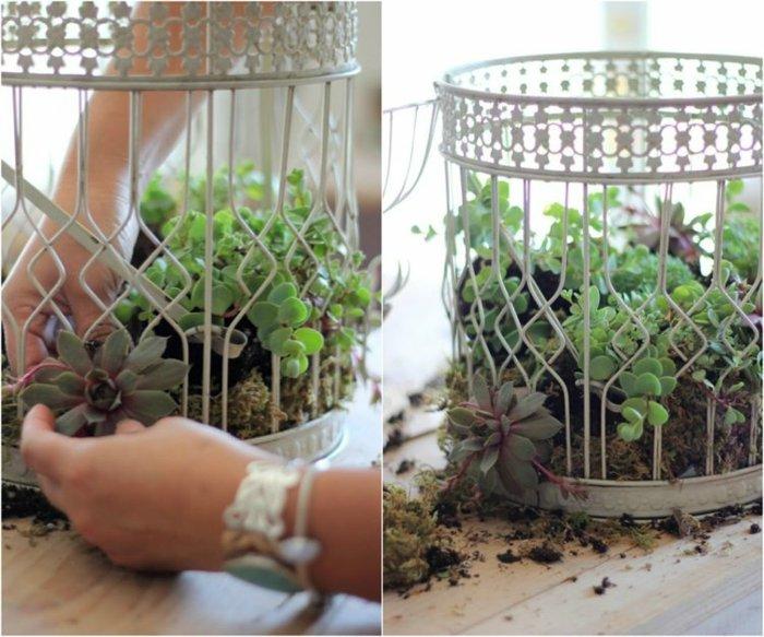 jardines suculenta metales lineas jaulas