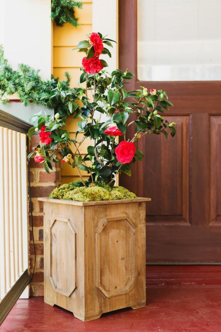 madera plantaciones especies muestras muebles