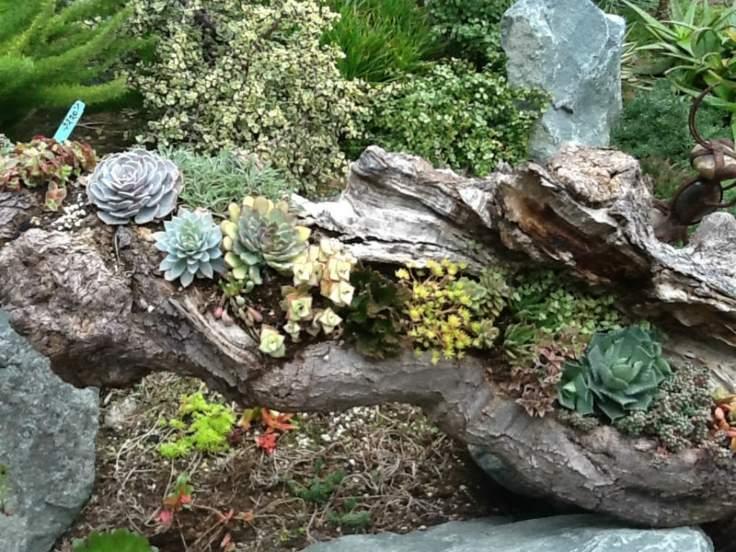 Suculentas ideas para decorar el jard n for Jardines con piedras y troncos