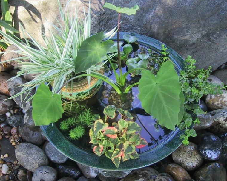 mini estanque plantas acuaticas
