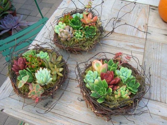 nidos plantas estilos materiales fuentes