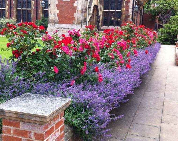 original decoracion jardin lavandas rosas