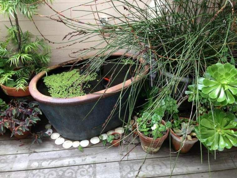 original idea mini estanque