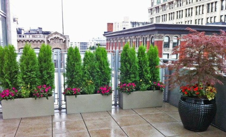 plantas terraza macetas opciones interesantes ideas