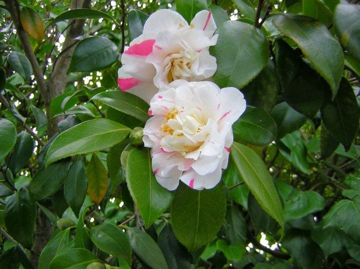 rosa blanco elementos sitios detalles