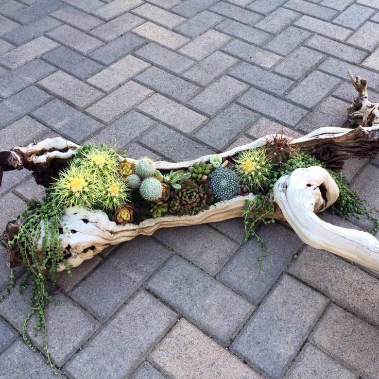 succulents decoration pots old wood ideas