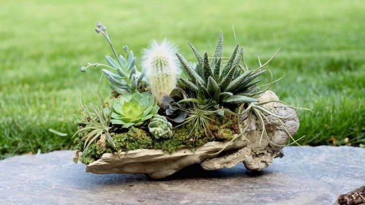 succulent ideas old wood outdoor decoration ideas