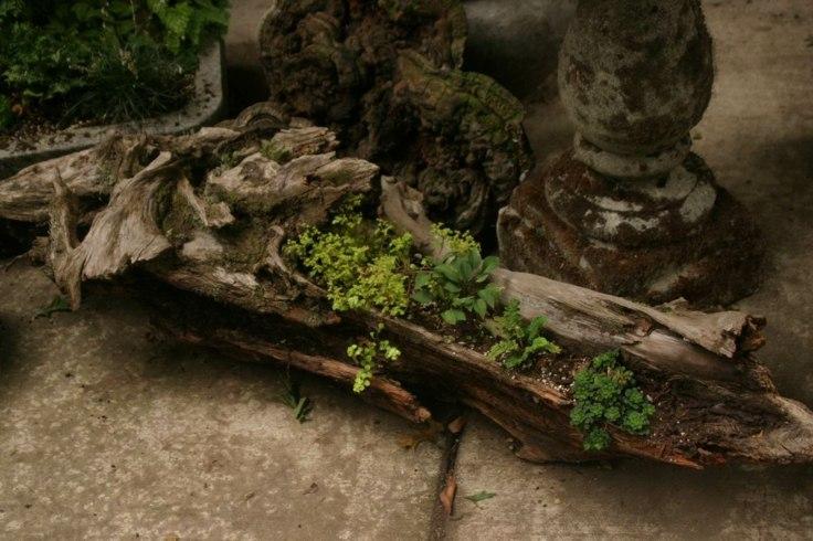 suculentas ideas madera vieja decoracion jardin interesante