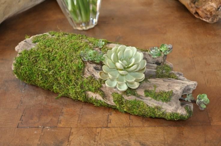 suculentas ideas madera vieja jardindecor original musgo