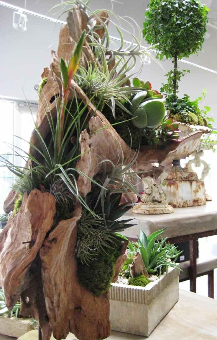 suculentas ideas madera vieja jdecoracon interesante plantas combinacion
