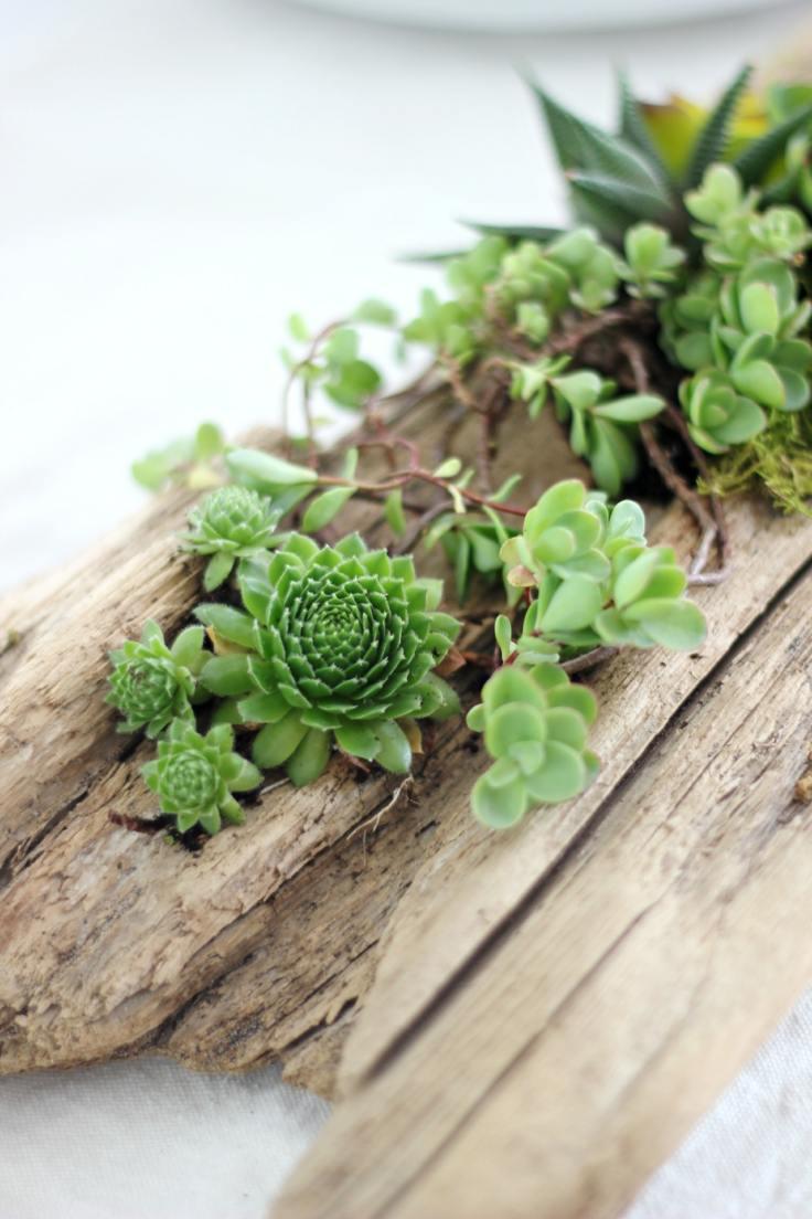 suculentas ideas madera vieja macetas opciones pequeño