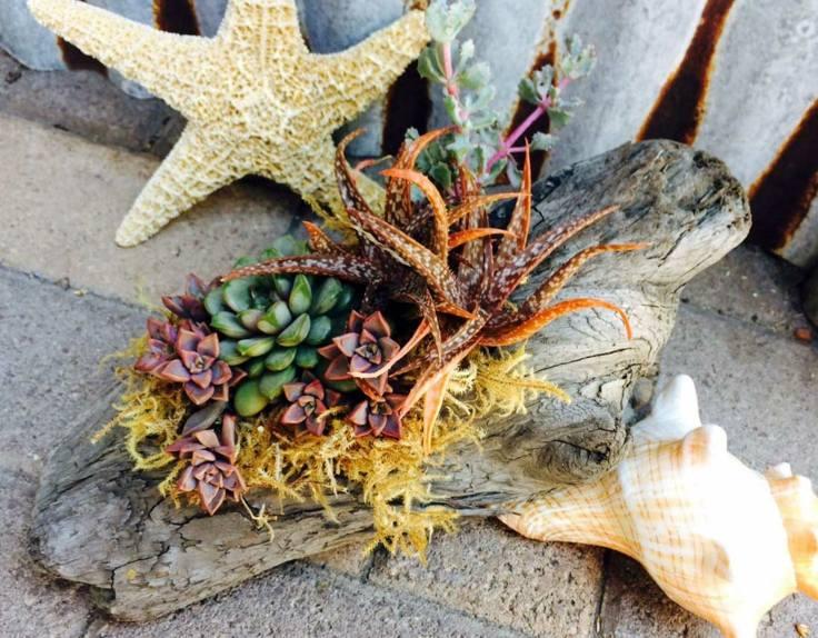 suculentas ideas madera vieja opciones decoracion playa jardin
