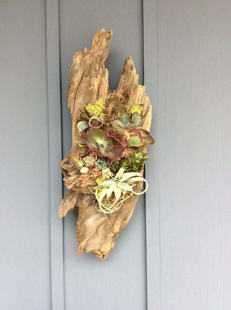 suculentas ideas madera vieja pared jardin estilo