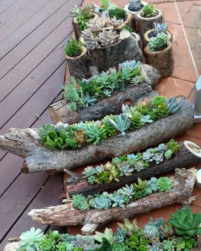 Reutilizando troncos de diferentes dimensiones para plantar suculentas