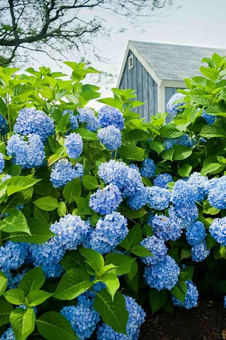 variedas azules campo casa fuentes