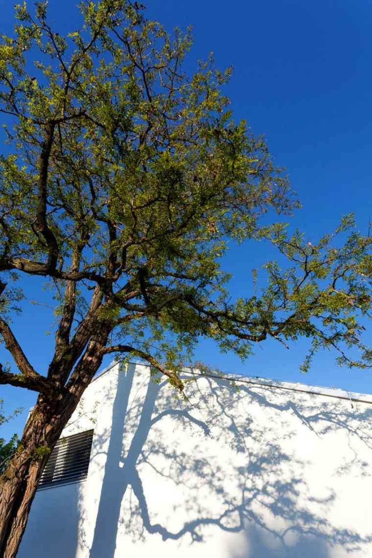 casa practica arboles sombras blanco