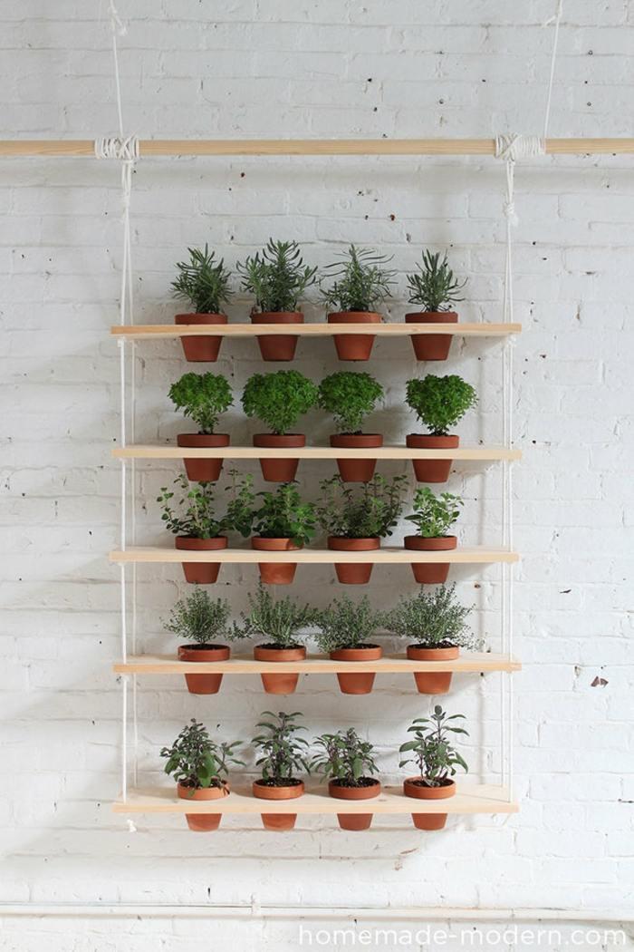 hierbas aromaticas paredes blancas efectos