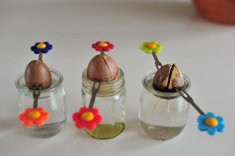 ayudar gernminar semillas de aguacates