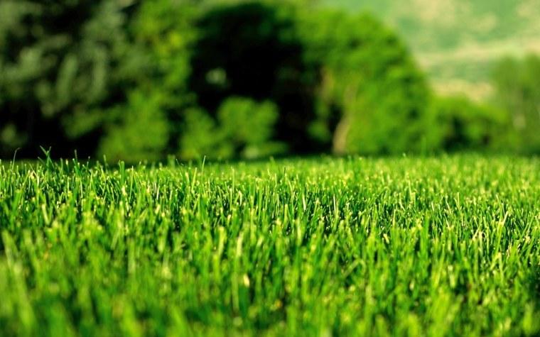 bonito cesped muy verde