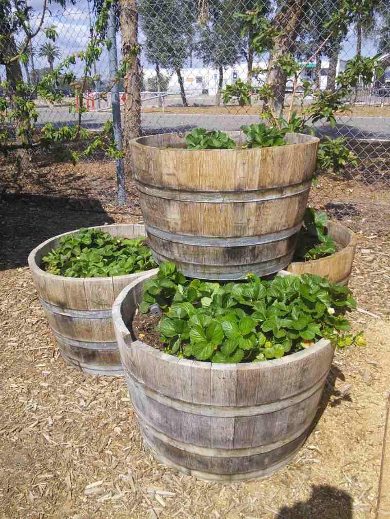 cómo cultivar patatas barriles