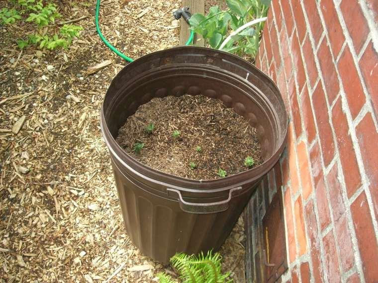 cómo cultivar patatas pequeñas barril