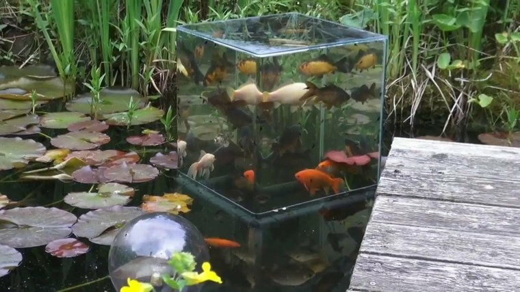 cubo moderno peces koi