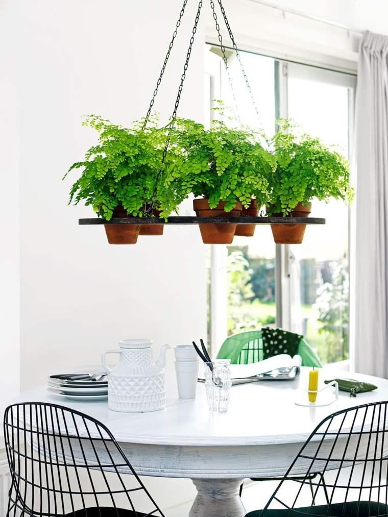 Decorar con plantas de interior la casa - Plantas interior colgantes ...