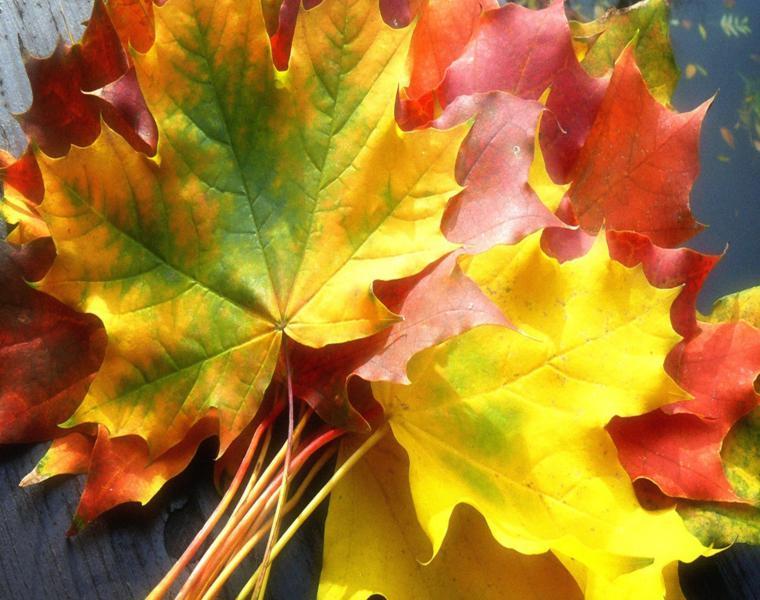 decoracion mesa bonitas hojas secas