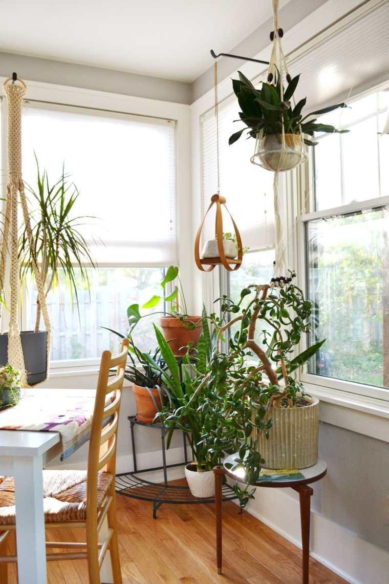 Decorar con plantas de interior la casa for Plantas de interior duraderas