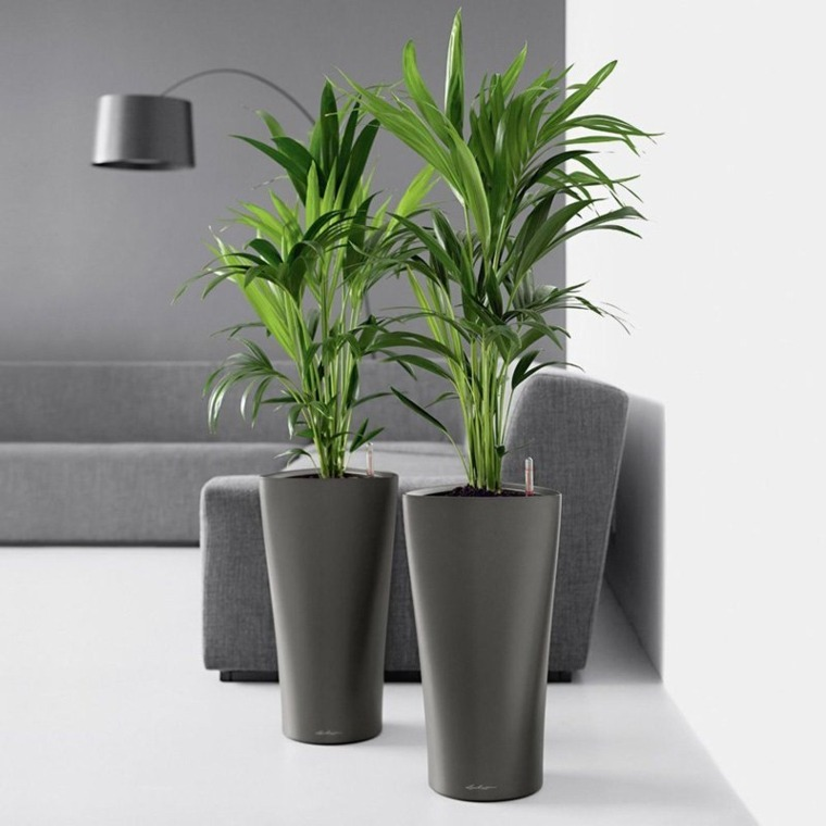 decorar con plantas de interior salones