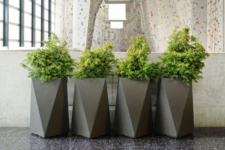 decorar con plantas de interior casas