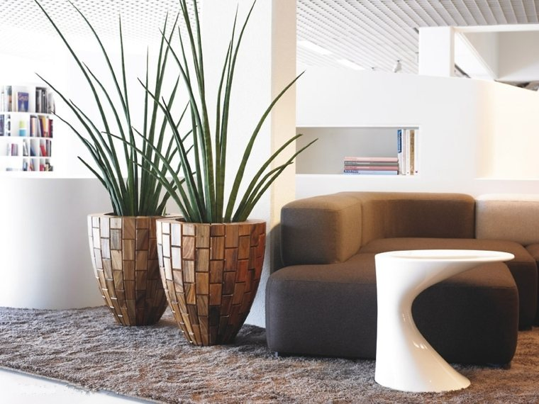 decorar con plantas de interior grandes salón