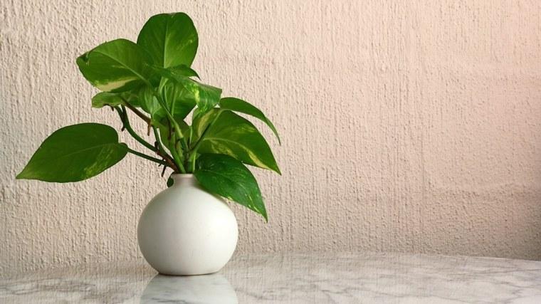 decorar con plantas de interior mesa