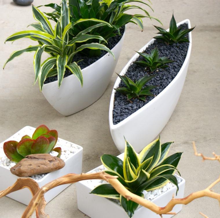 decorar con plantas de interior modernas