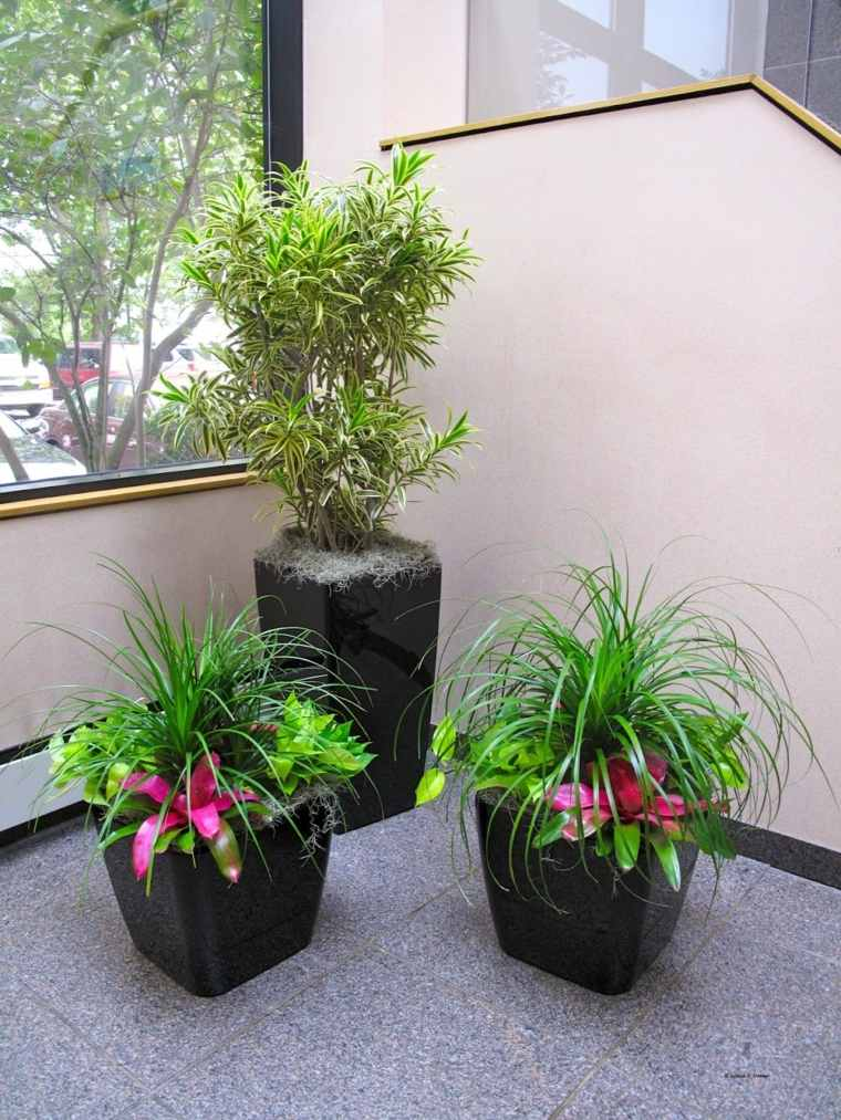 decorar con plantas interior