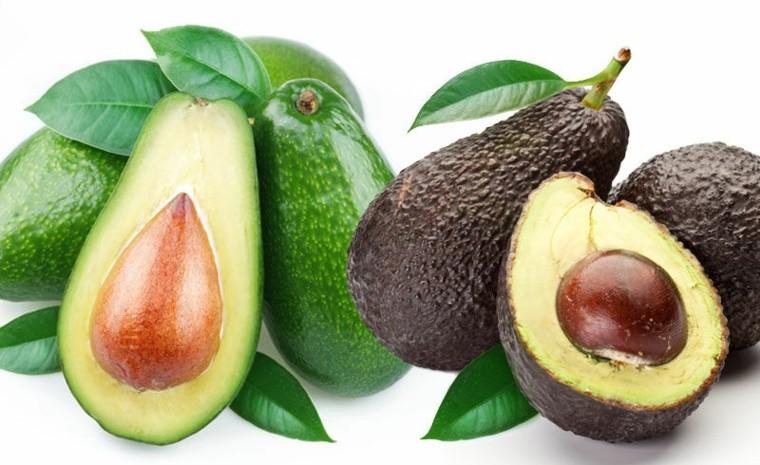 diferentes tipos frutos aguacates semilla