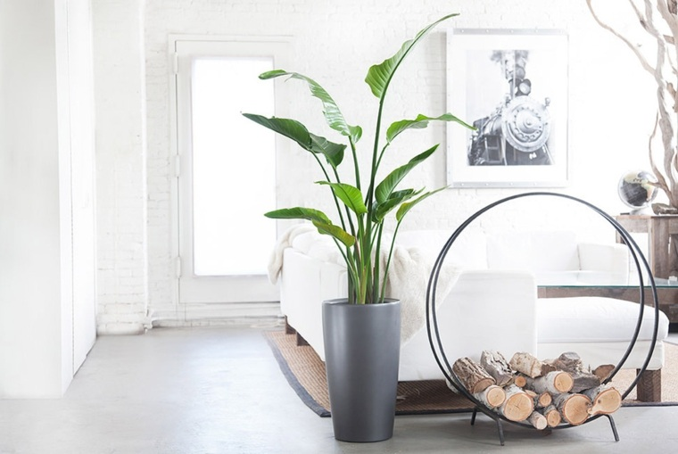 decorar con plantas de interior casa