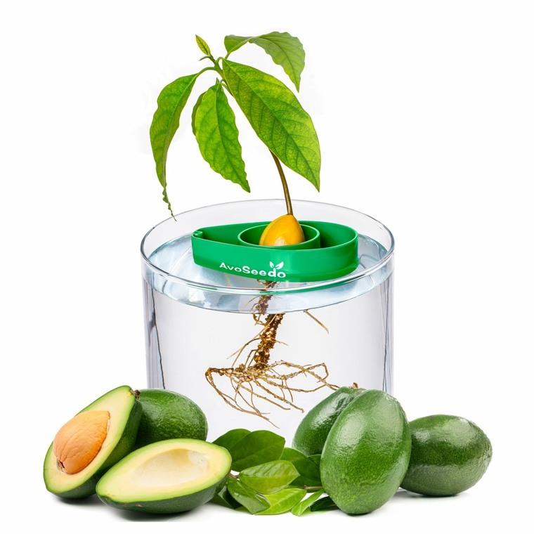 germinador especial semillas aguacarte