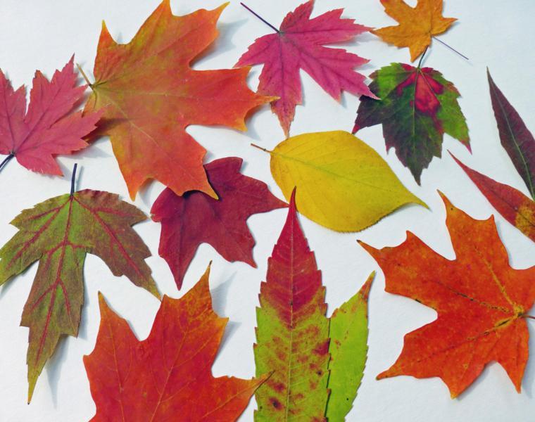 hojas arboles secas muchos colores