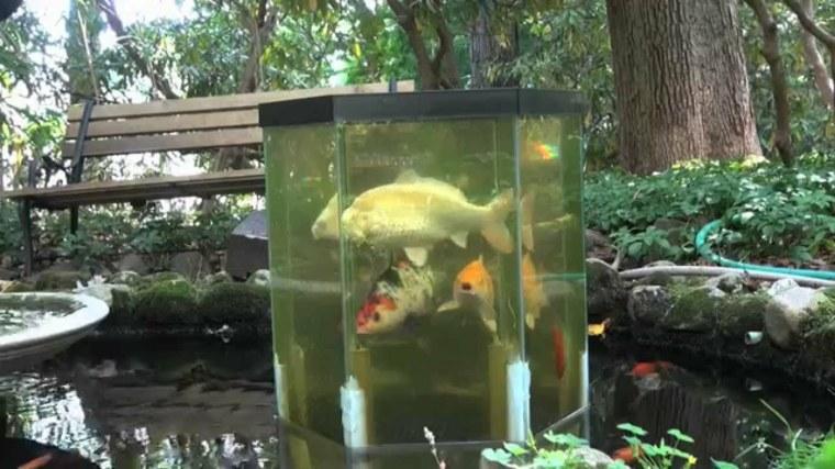 estanques diy de dise o minimalista para peces koi